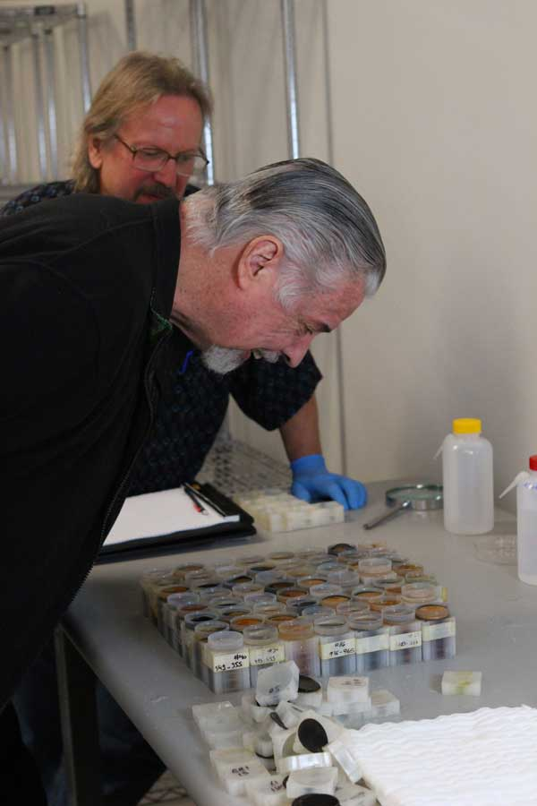 David Hall inspects gold coin in tubes